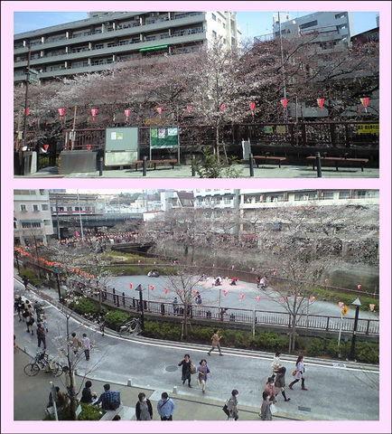 桜130320s.jpg